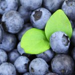 background 2281 960 720 150x150 - cup-with-blueberries_1203-2167